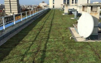 Toiture terrasse inaccessible végétalisé